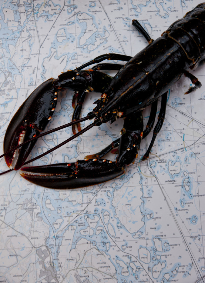 henrik_trygg-lobster-2474