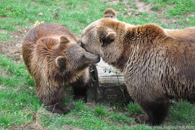 Bern-i-medvedi
