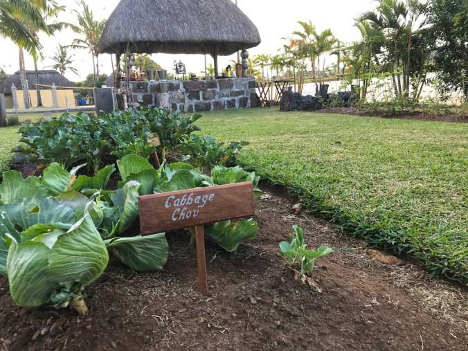 Garden-to-table-1